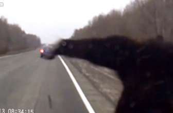Car Vs Bear And Drunk Driver Hits Police Car